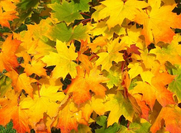 Nu är hösten här